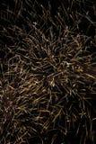 Fogos-de-artifício maciços Foto de Stock