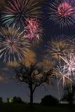 Fogos-de-artifício na noite Imagens de Stock