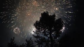 fogos-de-artifício no céu escuro video estoque