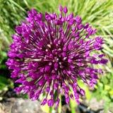 fogos-de-artifício de uma flor imagens de stock