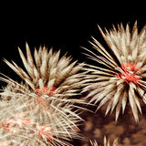 Fogos-de-artifício no céu noturno Foto de Stock Royalty Free