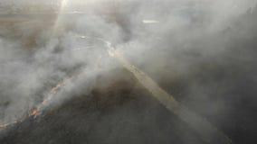 Fogos em grande escala Grama e árvores de queimadura em uma grande área vídeos de arquivo