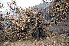 Fogos nas florestas de Gran Canaria Gran Canaria foto de stock royalty free