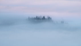 Fogs..fogs. Carpathian mountains with pine trees in the fog Stock Photo