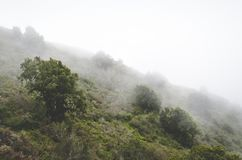Fogs on Green Green Trees over the Mountain Stock Photo