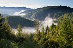 Fogs Between Green Tress Royalty Free Stock Photos