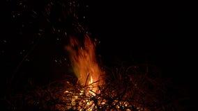 Fogueira de queimadura em um fundo preto cercado por ramos Fim acima vídeos de arquivo