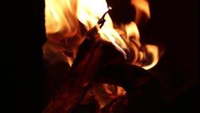 Fogueira, fogo de acampamento de queimadura no fundo do preto da noite filme
