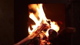 Fogueira, fogo de acampamento de queimadura no fundo do preto da noite vídeos de arquivo