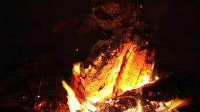 A fogueira grande da noite queima-se em um esclarecimento na floresta, extremidades da queimadura do fogo vídeos de arquivo