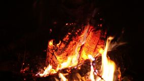 A fogueira grande da noite queima-se em um esclarecimento na floresta, extremidades da queimadura do fogo video estoque