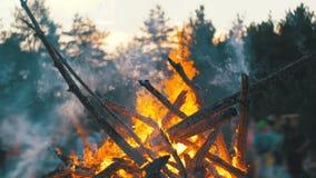 Fogueira grande da queimadura dos ramos na noite na floresta no fundo dos povos video estoque