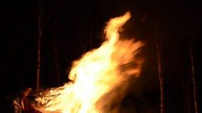 Fogueira maciça na floresta da árvore de vidoeiro da noite do inverno