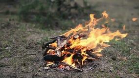 A fogueira pequena do acampamento que queima na primavera a floresta filme