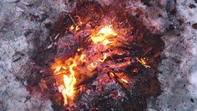 A fogueira queima-se na neve nas madeiras, em um fundo de ?rvores cobertos de neve fogo que queima-se no inverno frio Neve, turis video estoque