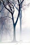 fogy Στοκ φωτογραφίες με δικαίωμα ελεύθερης χρήσης