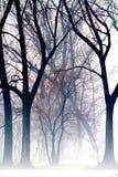 fogy Στοκ Εικόνα