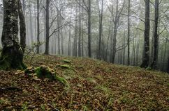 Fogy forest. Inside the Navarra's fogy forest in Spain Stock Images