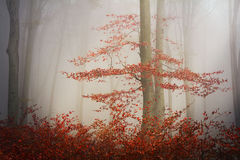 Fogy forest autumn Stock Photography