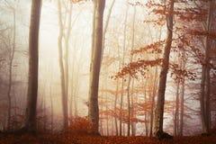 Fogy forest autumn Stock Photos