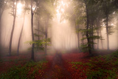 Fogy forest autumn Royalty Free Stock Photography