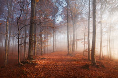 Fogy forest autumn Stock Images