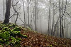 Fogy forest. Inside the Navarra's fogy forest in Spain Royalty Free Stock Photos