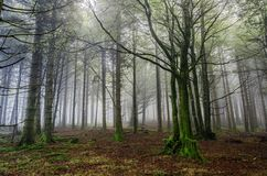 Fogy forest. Inside the Navarra's fogy forest in Spain Royalty Free Stock Images