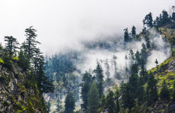 Fogy forest in Naran Kaghan valley, Pakistan. Thousands of tourists travel here to see wonderful valleys, rivers, mountains, glaciers, pine forests, lush stock image