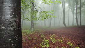 Fogy forest with nature rainy sounds. Fogy forest autumn with nature rainy sounds stock footage