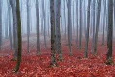 Fogy forest. Red leaves in the blue fogy forest Royalty Free Stock Photography