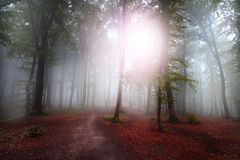 Fogy forest Royalty Free Stock Images