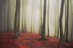 Fogy forest Royalty Free Stock Photography