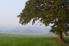 Fogy landscape in South of Limburg Royalty Free Stock Photos