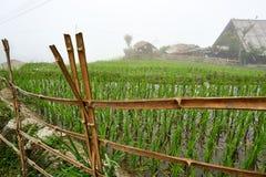 Fogy-Landschaft von Ricefields in Laochai-sapa valey in Vietnam Sapa, Vietnam - 22 mai 2019 lizenzfreie stockfotos