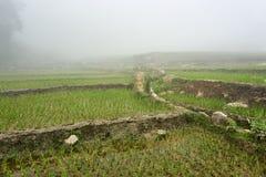 Fogy-Landschaft von Ricefields in Laochai-sapa valey in Vietnam Sapa, Vietnam - 22 mai 2019 lizenzfreie stockfotografie