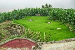 Fogy-Landschaft von Ricefields in Laochai-sapa valey in Vietnam Sapa, Vietnam - 22 mai 2019 stockfoto