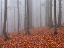 fogy las Obrazy Royalty Free