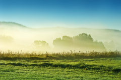 Fogy morning Royalty Free Stock Photos