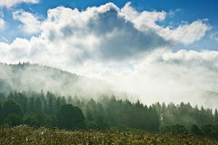 Fogy morning Royalty Free Stock Photography