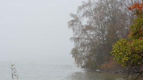 Fogy morning at a lake with birch trees changing color during autumn. Trees next to a fogy lake stock video