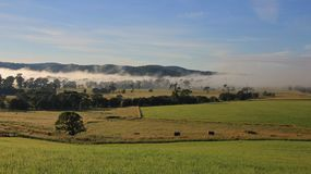 Fogy morning in rural New South Wales Stock Images