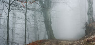 Fogy path in the woods. Fogy scenery in the woods during autumn stock photography