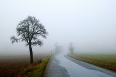 Fogy road. With tree and wet surface royalty free stock images