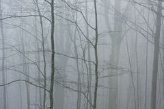 Fogy scenery in the woods. During autumn stock photos