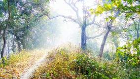 Fogy-Weg in einem Wald stockbilder