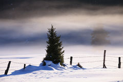 Fogy winter landscape Royalty Free Stock Photography