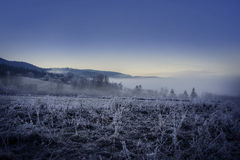 Fogy winter morning Royalty Free Stock Images