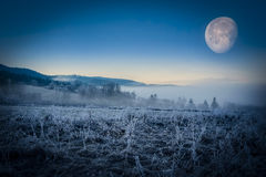 Fogy winter morning Royalty Free Stock Photo