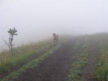Fohlen in einem Nebel Lizenzfreie Stockfotografie